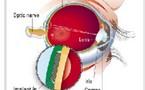 Bientôt des yeux bioniques