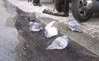 Les Pigeons se la coulent douce